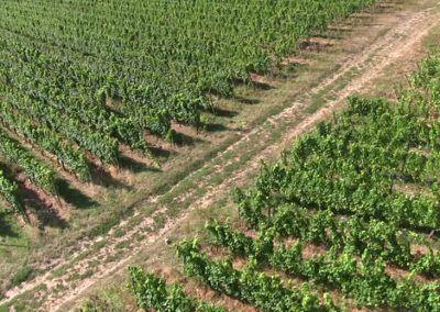 Analisis de zonas de regadios con Drones