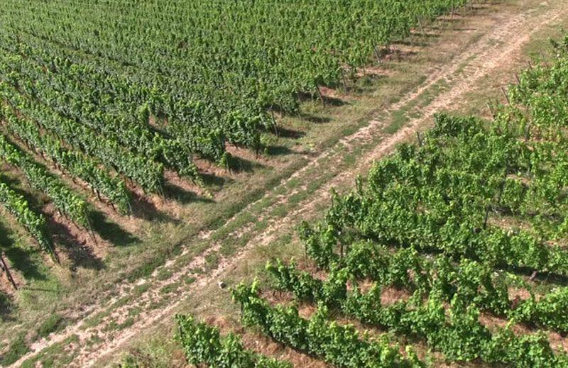 Control de agricultura con drones en Cantabria