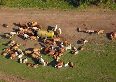 Control de Vacas desde un dron
