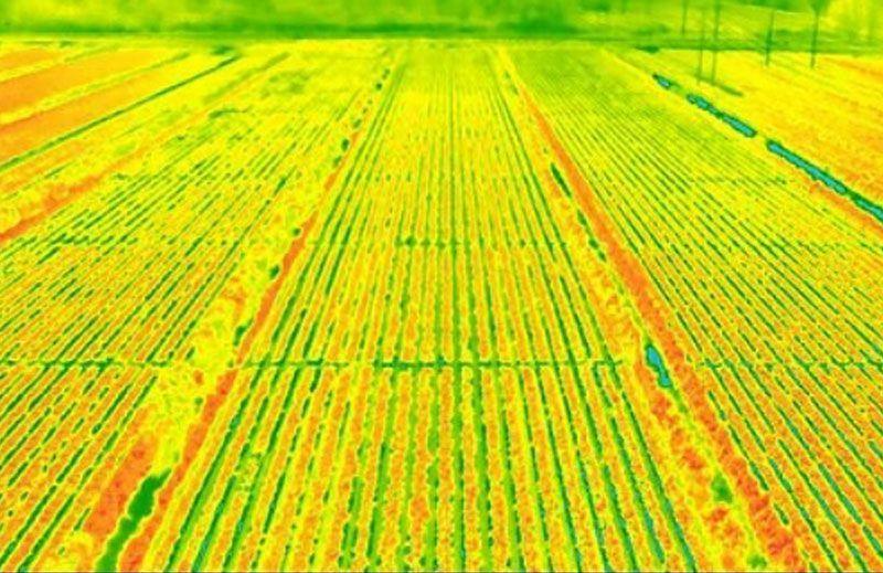 Termografia con drones en sembrados