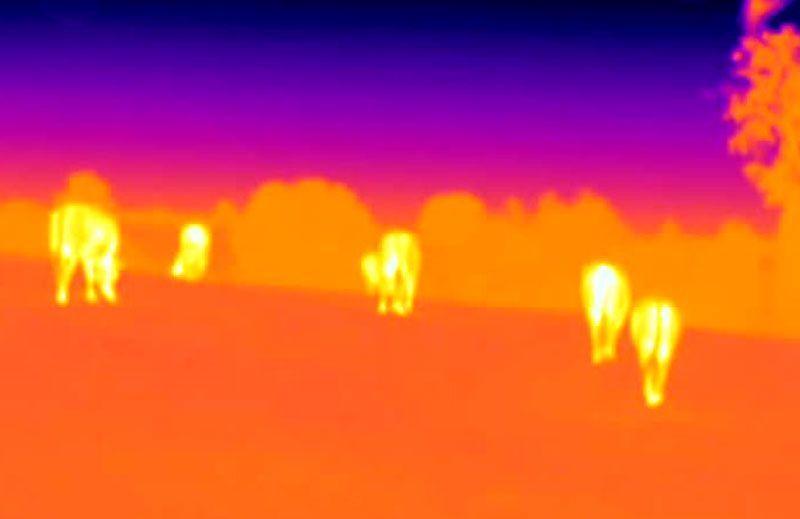 Control de ganado con Drones Vextra Media