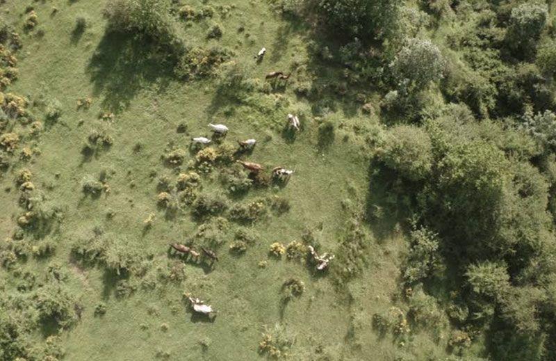 Localización de ganado con Drones Vextra Media